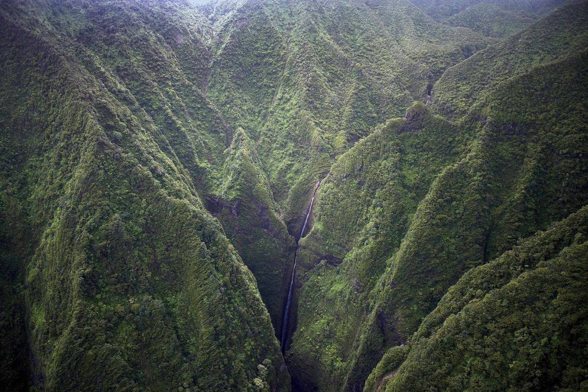 montagne verte avec des arbres de la nouvelle zeland